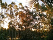 Wald auf dem Sonnenuntergang Lizenzfreie Stockbilder