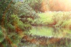 Wald auf den Banken des Flusses stockbild