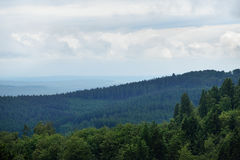 Wald auf den Hügeln Stockfotografie