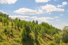 Wald auf den Steigungen Stockbilder