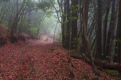 Wald auf der Insel von Teneriffa, von Natur und von Wandern Lizenzfreie Stockbilder