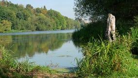 Wald auf der Querneigung des Flusses stock footage