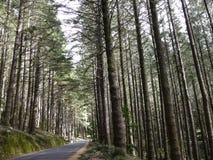 Wald auf der Straße von Ribeiro-frio in Madeira lizenzfreie stockbilder