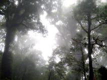 Wald auf Doi-Inthanon stockfotografie