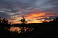 Wald auf Dunkelorange bewölkt Hintergrund stockfotos