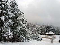 Wald auf einem Berg bedeckt mit Schnee Lizenzfreie Stockfotos