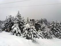 Wald auf einem Berg bedeckt mit Schnee Stockbild