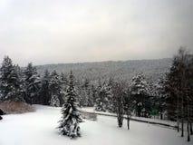 Wald auf einem Berg bedeckt mit Schnee Stockbilder