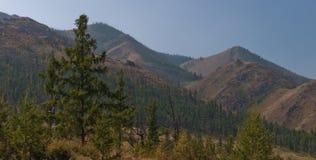 Wald auf einem Berghang Stockfoto