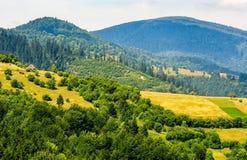 Wald auf einem Gebirgsabhang im ländlichen Gebiet Stockfoto