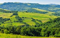 Wald auf einem Gebirgsabhang im ländlichen Gebiet Stockbild