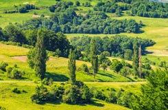 Wald auf einem Gebirgsabhang im ländlichen Gebiet Lizenzfreies Stockfoto