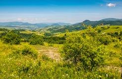 Wald auf einem Gebirgsabhang im ländlichen Gebiet Lizenzfreies Stockbild
