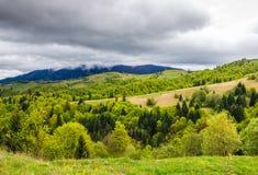 Wald auf einem Gebirgsabhang im ländlichen Gebiet Lizenzfreie Stockfotografie