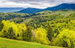 Wald auf einem Gebirgsabhang im ländlichen Gebiet Stockbilder