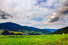 Wald auf einem steilen Berghang Stockfotografie