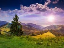 Wald auf einem steilen Berghang Stockfoto