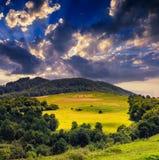 Wald auf einem steilen Berghang Lizenzfreies Stockfoto
