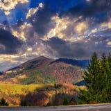 Wald auf einem steilen Berghang Stockbilder
