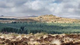 Wald auf einer Dartmoor-Landschaft Stockfotos