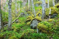 Wald auf Granitfelsen und -schluchten Stockfotos