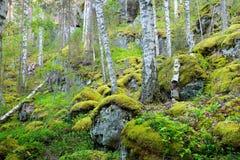 Wald auf Granitfelsen und -schluchten Lizenzfreie Stockfotos