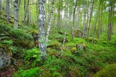 Wald auf Granitfelsen und -schluchten Stockbilder