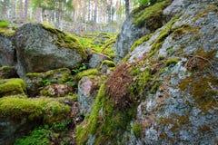 Wald auf Granitfelsen und -schluchten Stockfoto