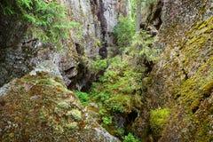 Wald auf Granitfelsen und -schluchten Stockfotografie