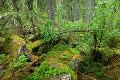 Wald auf Granitfelsen und -schluchten Lizenzfreies Stockfoto