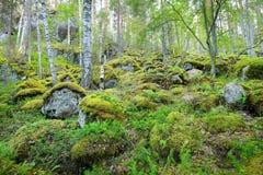 Wald auf Granitfelsen und -schluchten Stockbild