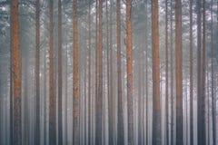 Wald auf Morgennebel Stockfotos