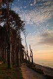 Wald auf Ufer Stockbild
