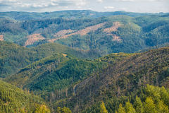Wald in Australien lizenzfreie stockfotos