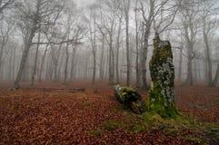 Wald am autum Lizenzfreie Stockfotos