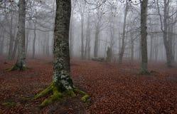 Wald am autum Lizenzfreies Stockbild