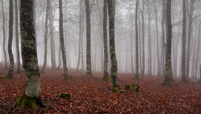 Wald am autum Lizenzfreie Stockfotografie