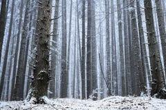 Wald bedeckt im Schnee während des Winters Lizenzfreie Stockbilder