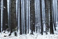 Wald bedeckt im Schnee während des Winters Stockbild