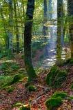 Wald bei Sonnenaufgang Lizenzfreie Stockbilder