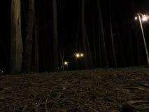 Wald belichtet nachts Stockfoto