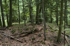 Wald - Berg in Polen Lizenzfreie Stockfotografie