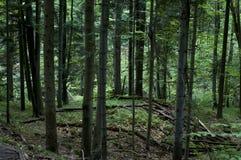 Wald - Berg in Polen Stockbilder
