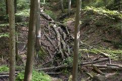 Wald - Berg in Polen Stockbild