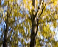 Wald-Bewegungsunschärfe Lizenzfreie Stockbilder