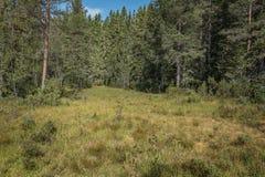Wald bloß in den Farben Stockbilder
