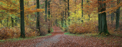 Wald in Dänemark stockbild