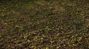 Wald 3d gerieben für Hintergrund Stockfotos