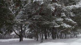 Wald, in dem es schneit und die Niederlassungen von Bäumen und von Kiefern umfasst stock video