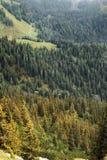 Wald in den bayerischen Alpen Lizenzfreie Stockfotografie